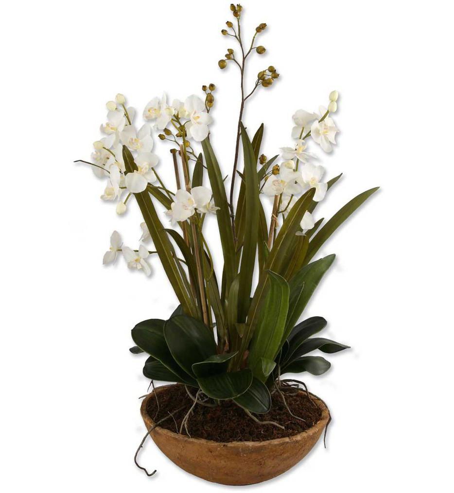 Uttermost - 60039 - Moth Orchid Planter