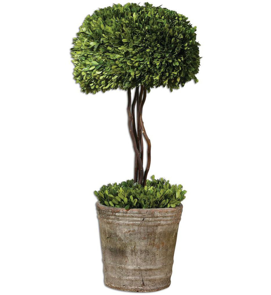 Uttermost - 60095 - Tree Topiary Preserved Boxwood