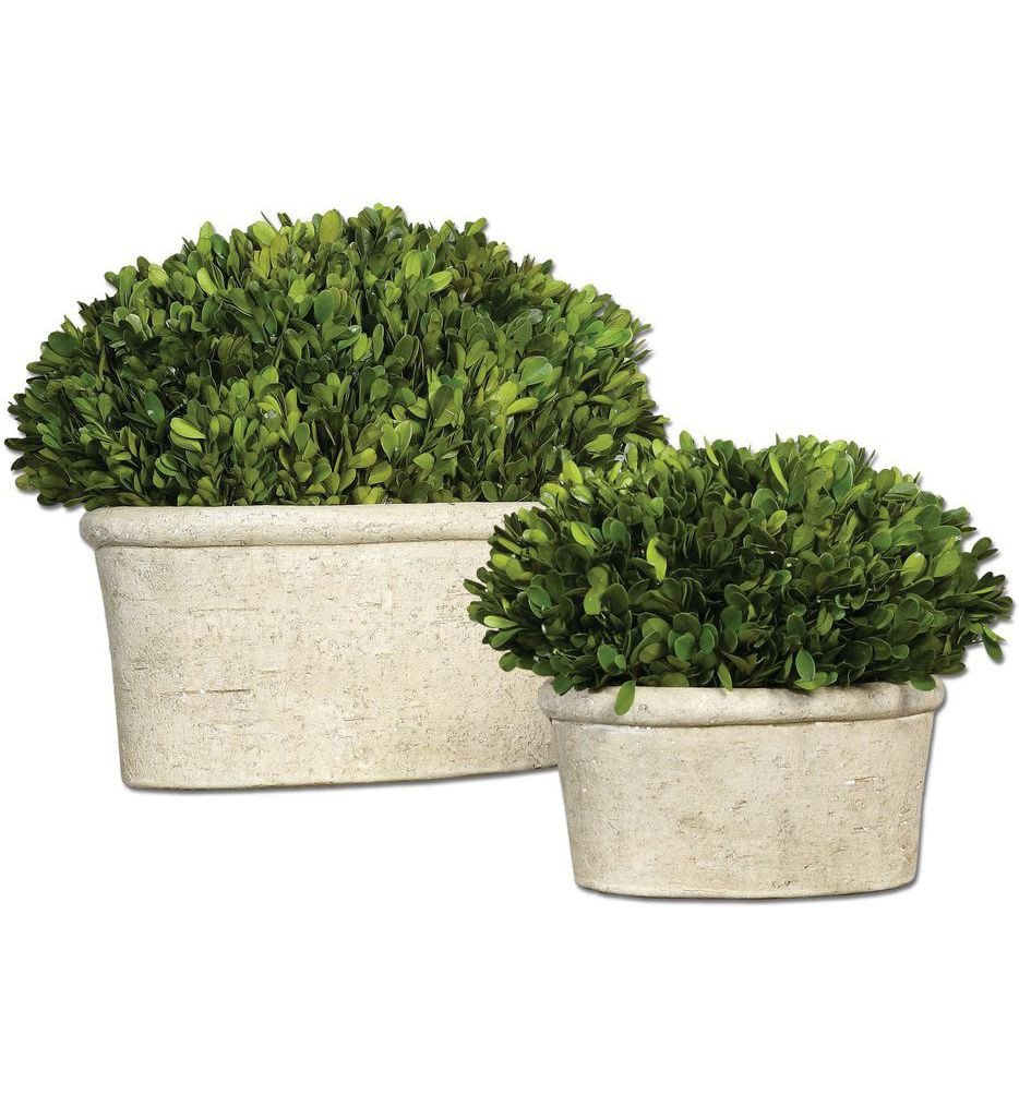 Uttermost - 60107 - Oval Domes Preserved Boxwoods (Set of 2)