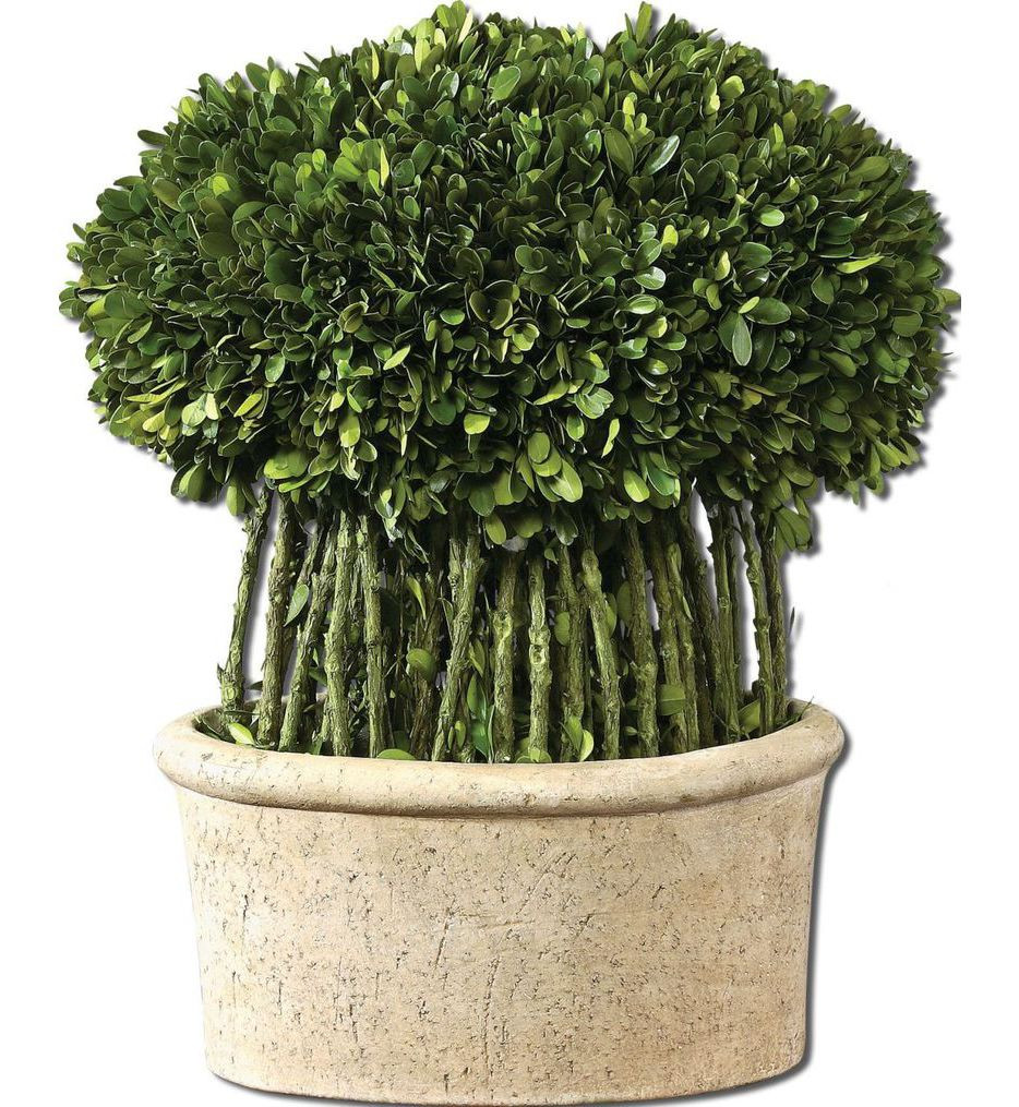 Uttermost - 60108 - Willow Topiary Preserved Boxwood